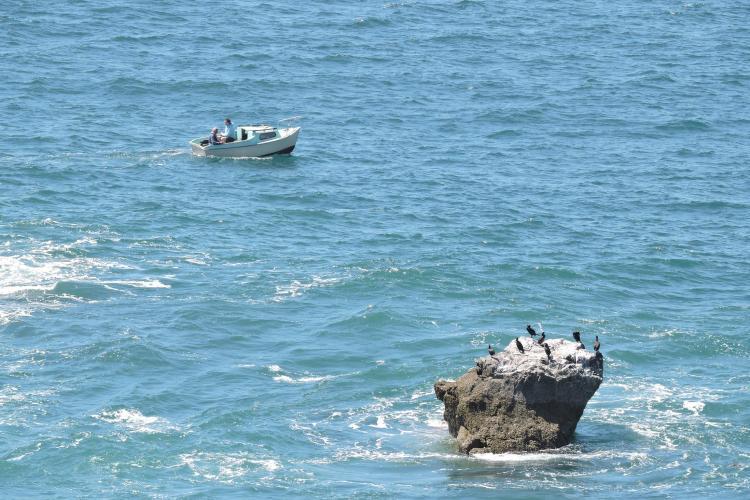 cormoran et petite barque