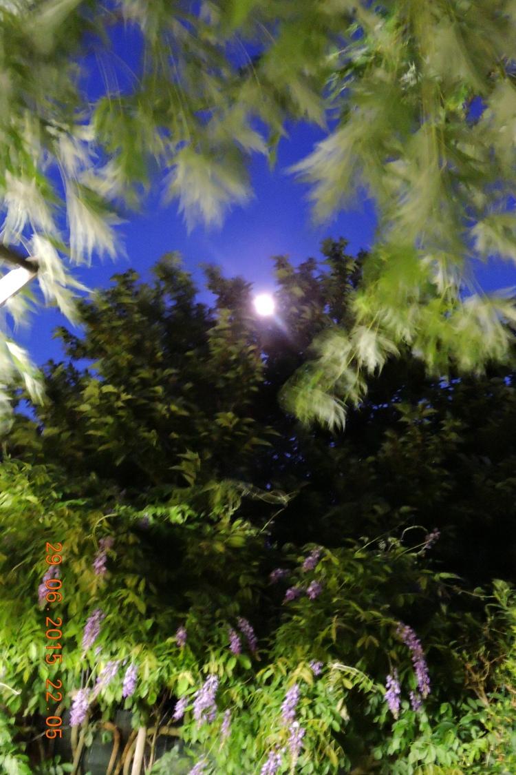 lune entre les feuillages